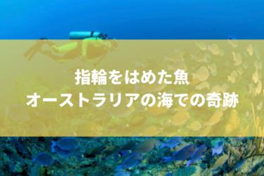 幸運を呼ぶ魚が発見された!!オーストラリアの海で、金の指輪をはめたボラが発見!